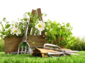 Садовый инвентарь: подготовка к сезону